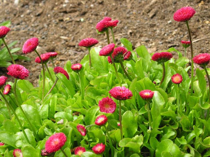 Prächtig Pflanzen und Garten - Gärtnereien-Verzeichnis: Bestehorns Markt #XR_56